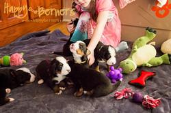 Social Puppies!
