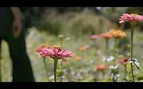 Screen Shot 2020-11-01 at 8.32.53 PM.png