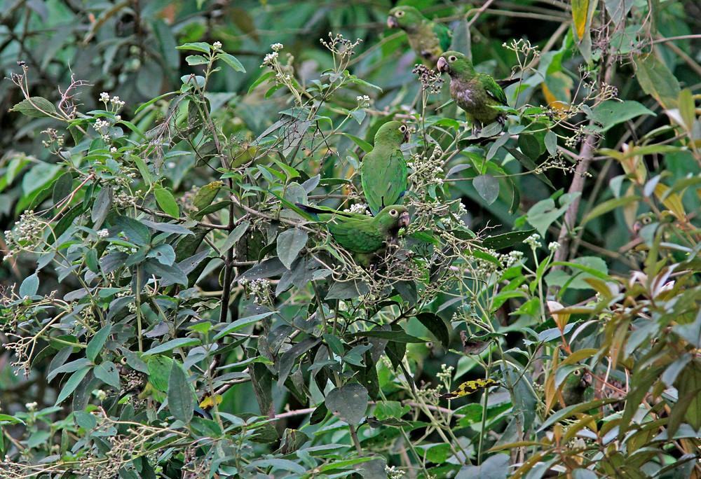 Las Brisas Nature Reserve | Costa Rica | Brdwatching