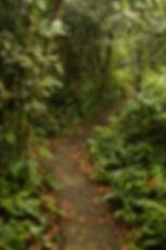 Las Brisas Nature Reserve in Costa Rica   Nature trails