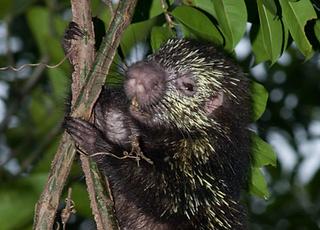 Las Brisas Nature Reserve | Costa Rica | Mammals