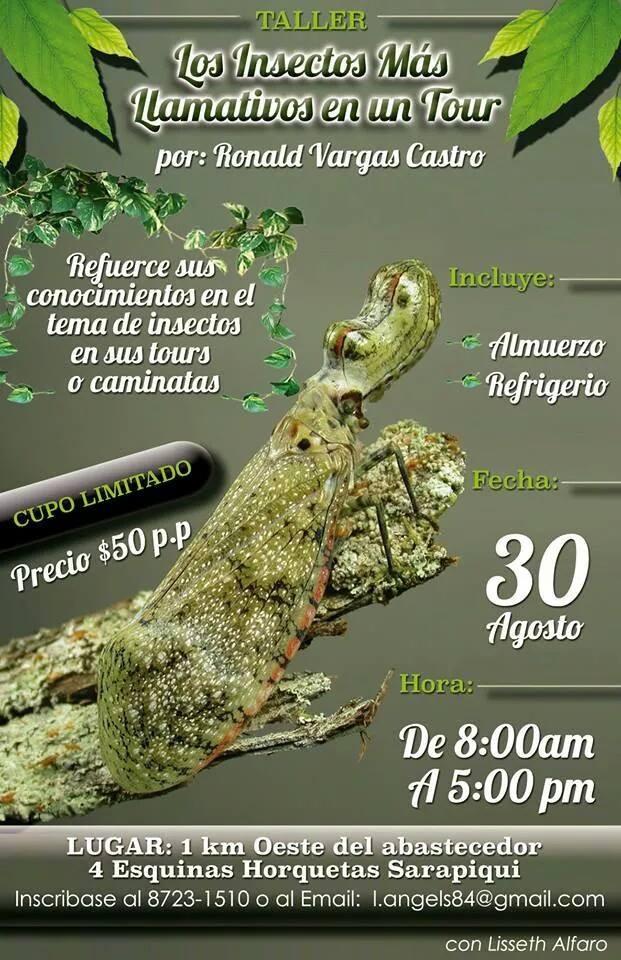 Taller de Insectos | Ronald Vargas | Costa Rica