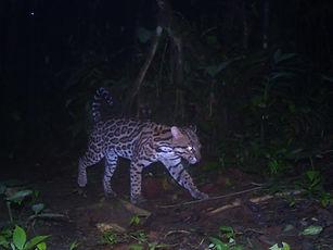 Las Brisas Nature Reserve | Costa Rica | Wildlife Remote Cameras