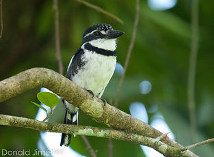 Las Brisas Nature Reserve | Costa Rica | Birds | Birdwatching