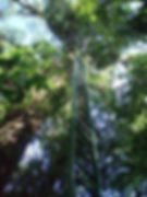 Las Brisas Nature Reserve in Costa Rica | Nature trails | Canopy Platforms