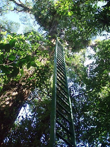 Las Brisas Nature Reserve in Costa Rica | Nature trails | Canopy Platforms