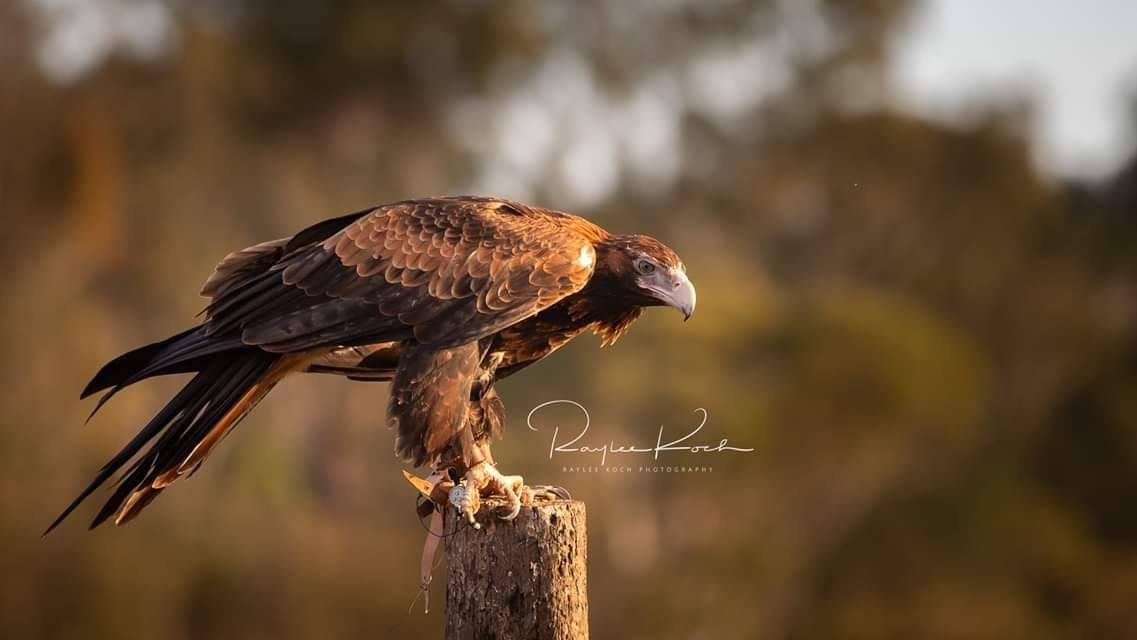 Eagle encounter