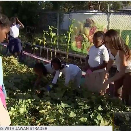 NBC6 | Urban Gardens Flourish in South Florida's Food Deserts