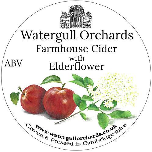 20 Litre Elderflower Bag in Box Cider (5%)