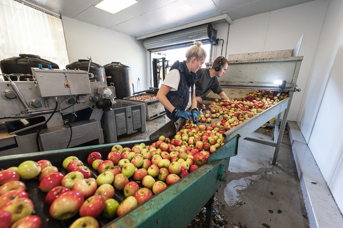 more apple grading
