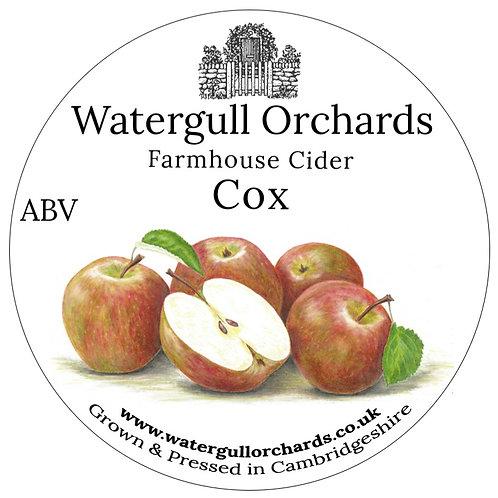 20 Litre Cox Bag in Box Cider (6.3%)