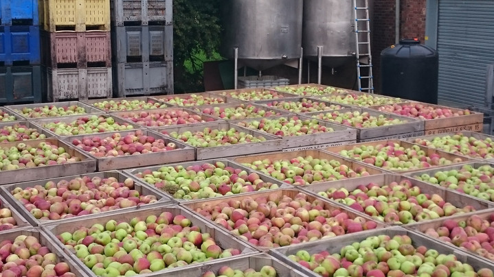 tonnes of apples - literally