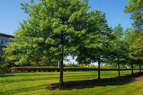 commercial services landscaping company pittsburgh