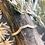 Thumbnail: Canyonlands | Mesa Ring
