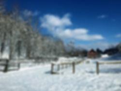 snow bently.jpg