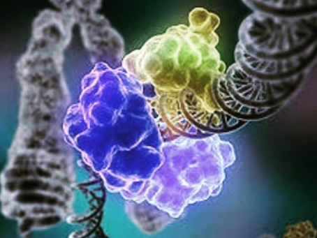 DNA Tamiri