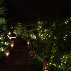 Fairy Light Wedding Hire Velvet Living