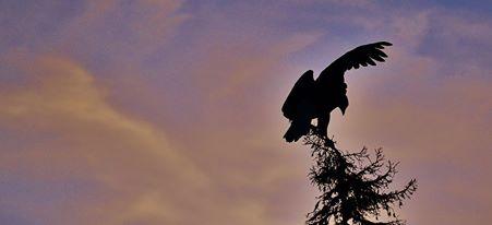 Bald Eagle territory