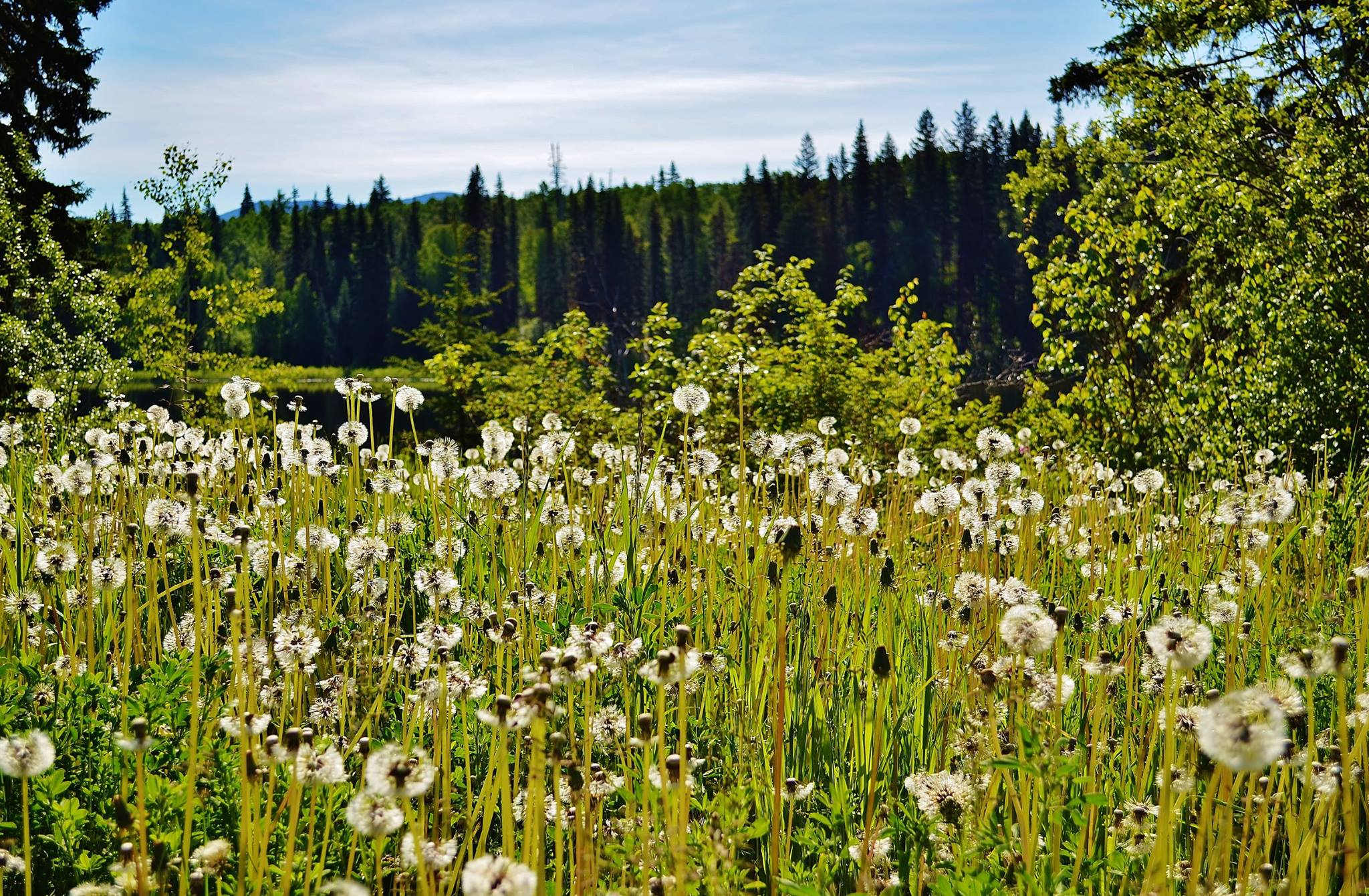 Nature hikes, backroad drives