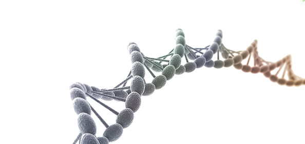 dna3_edited.png