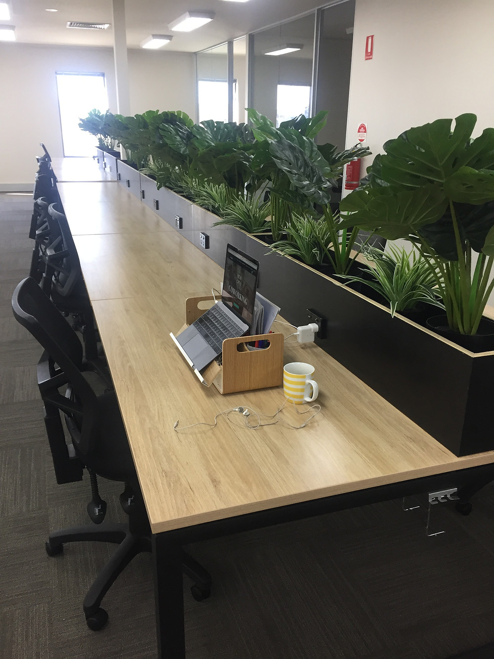 Dedicated desk spaces at Platypus Coworking