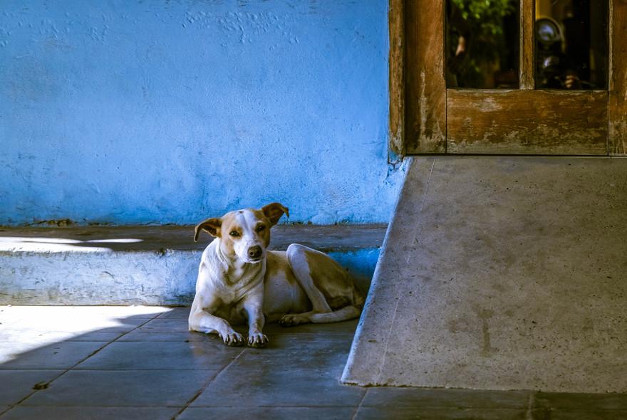 Cuba, vista dai cani