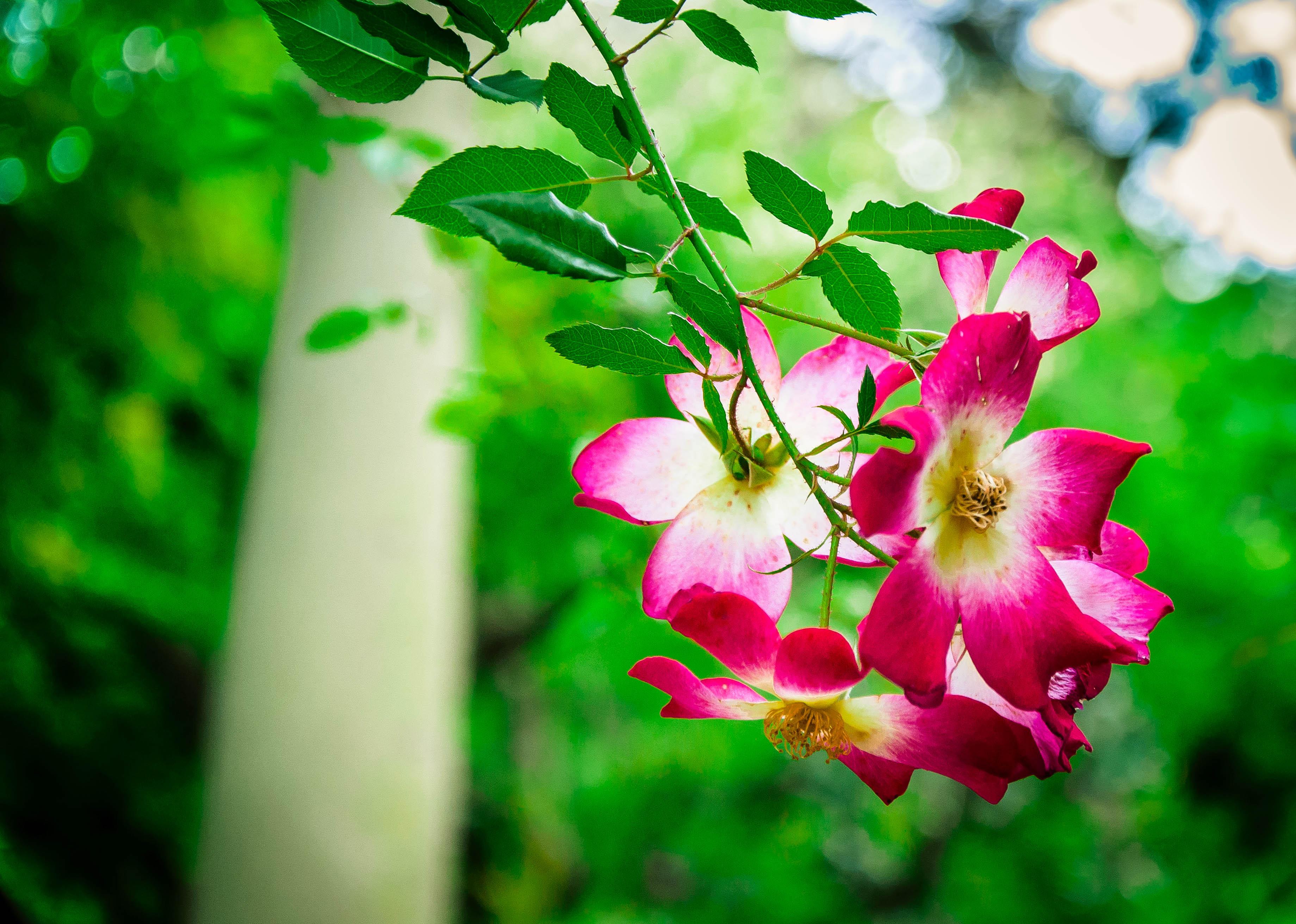 Flickr - Orto botanico, Palermo, Sicily