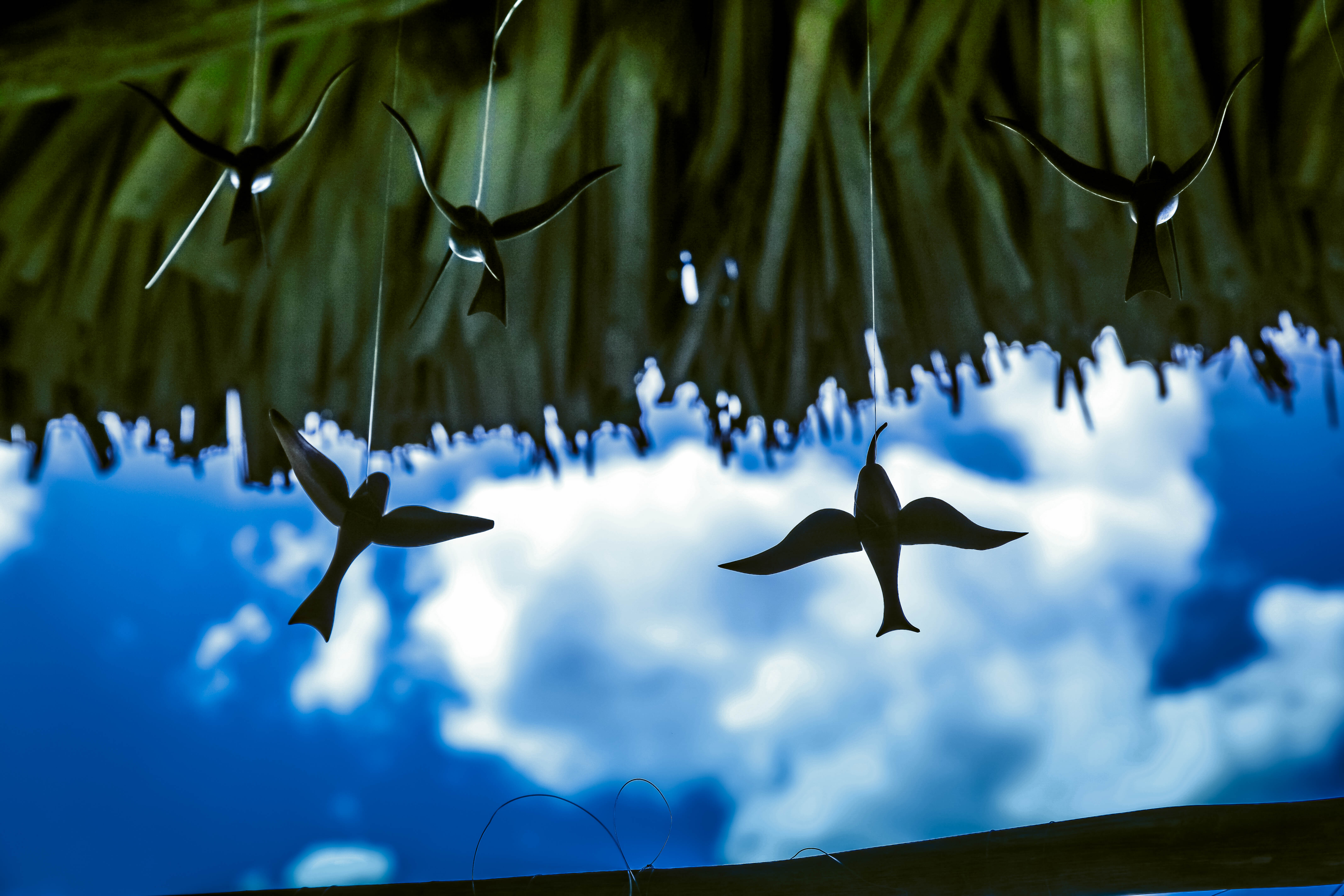 Flickr - Cuba, Viniales e la valle dei colibrì