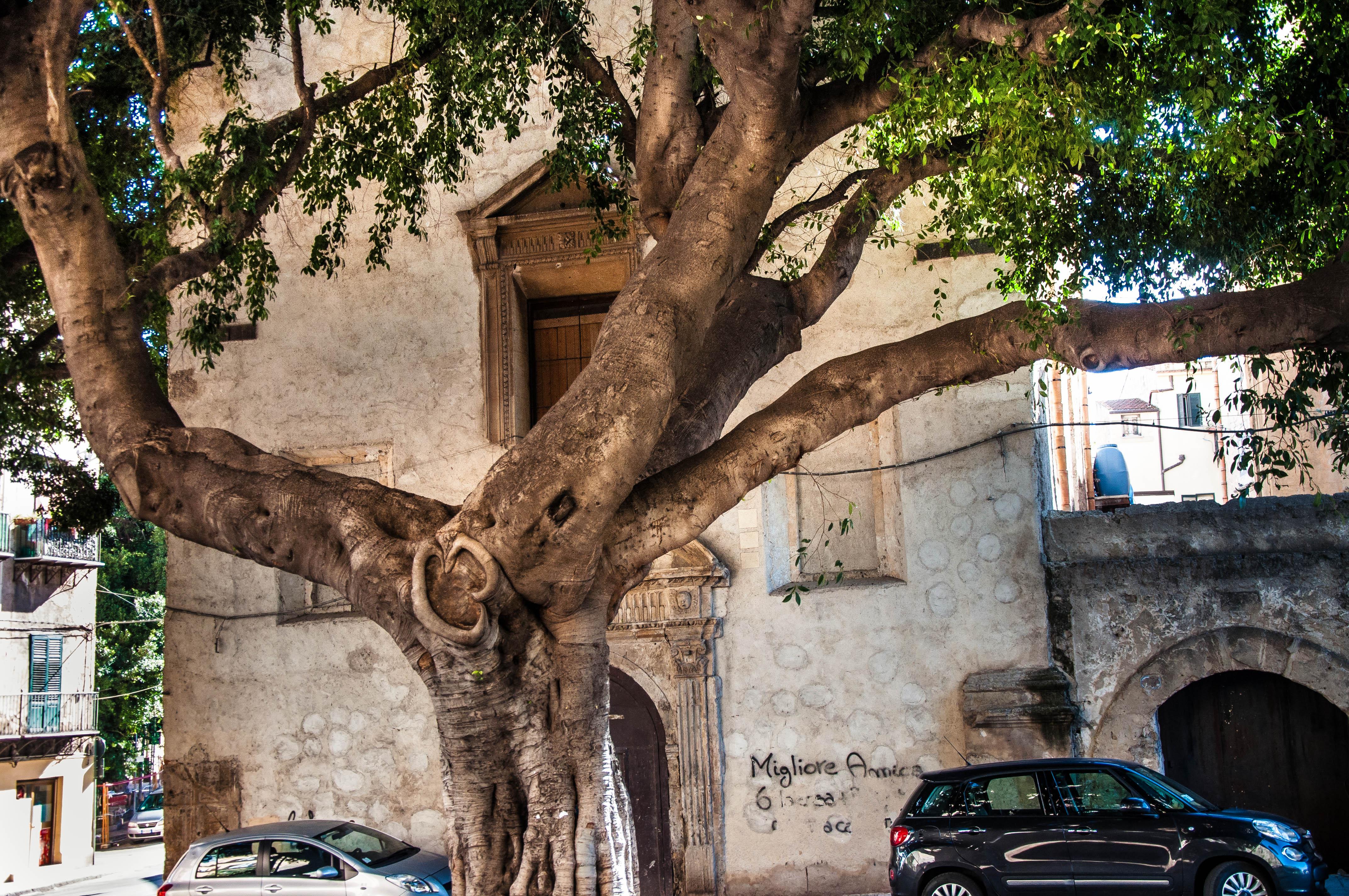 Flickr - Palermo.jpg