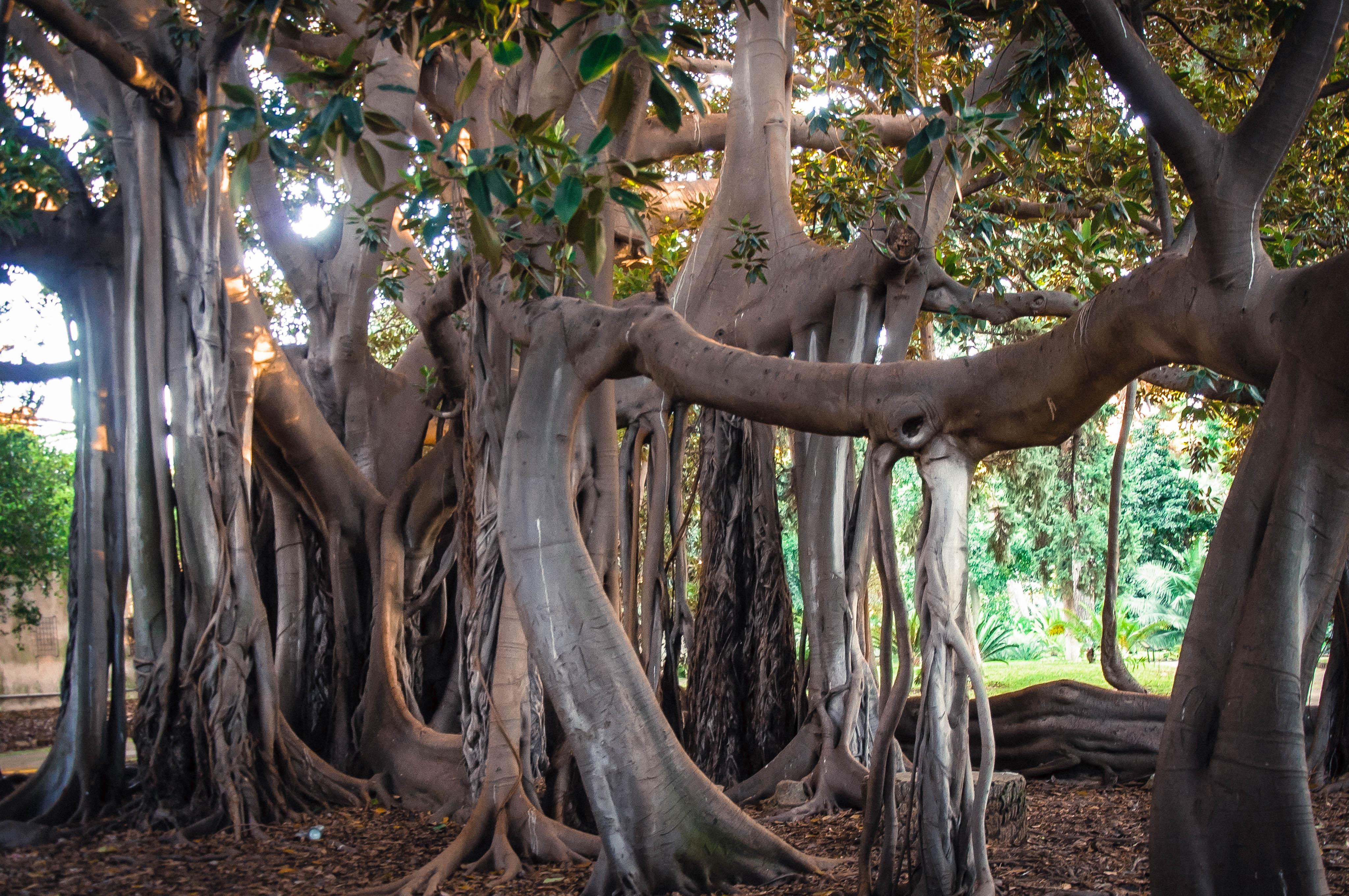 Flickr - Orto botanico, Palermo , Sicily