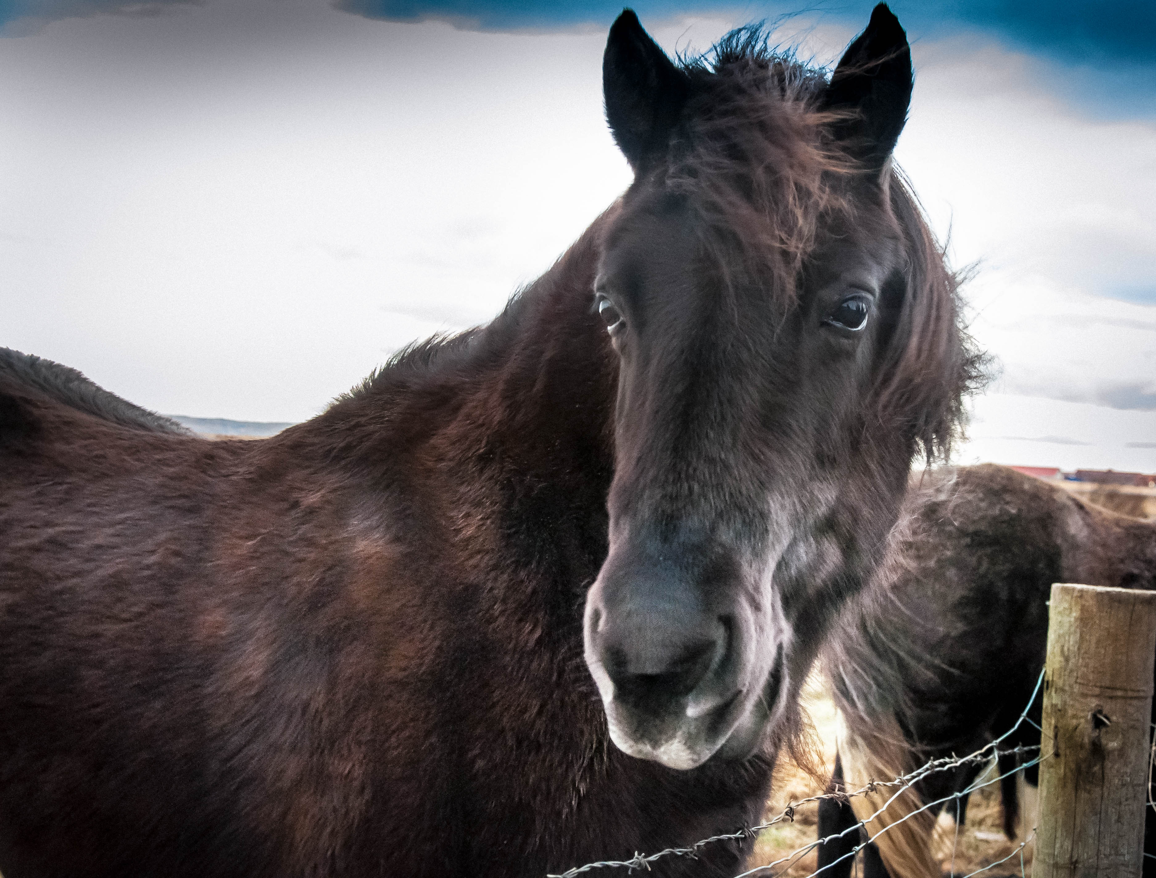 Flickr - Iceland visions, horses