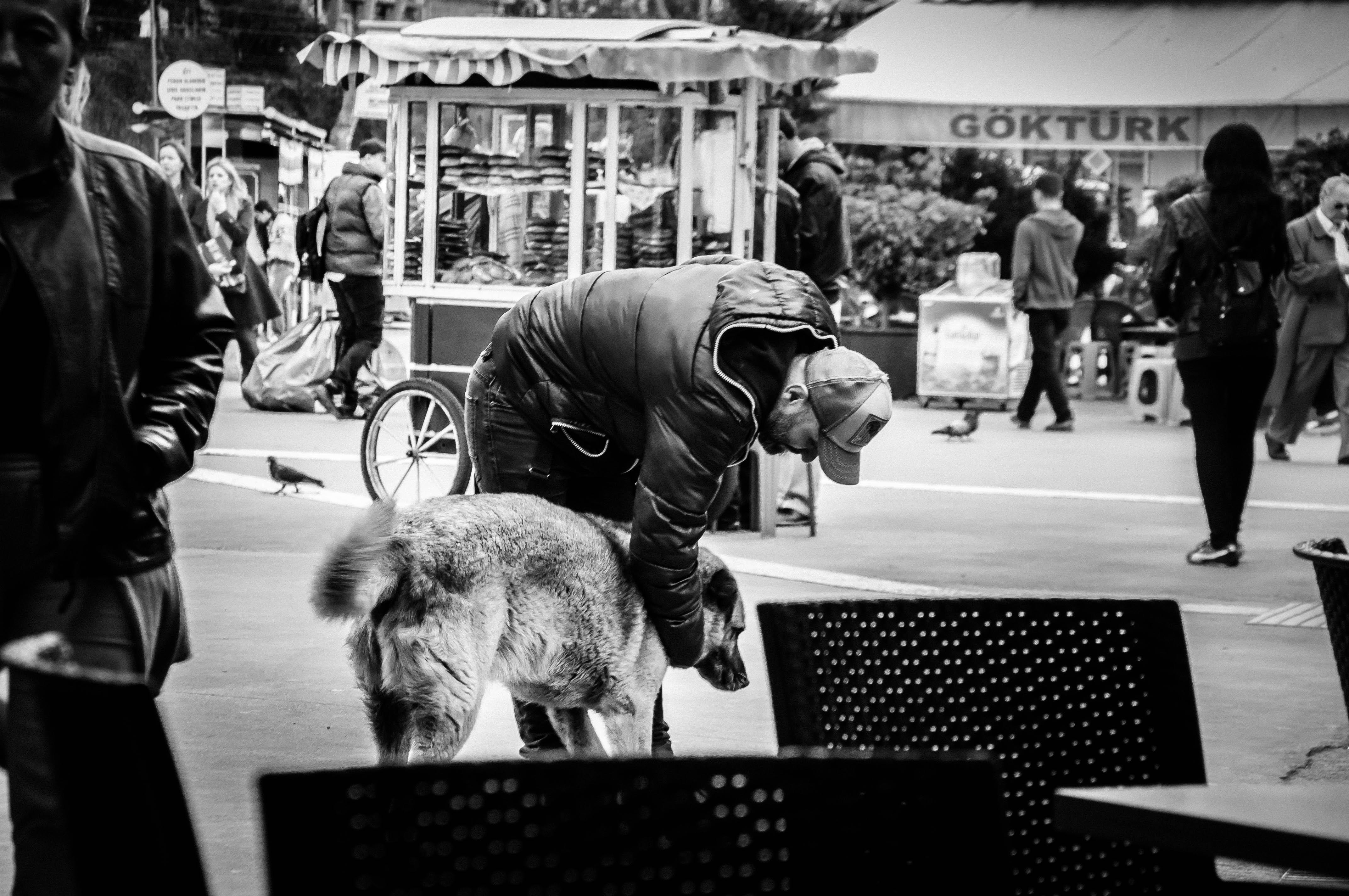 Flickr - Schegge di Istanbul, cani & gente