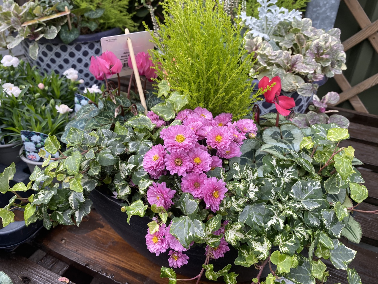 Potted Arrangements