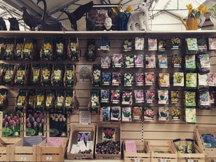Taylors Bulbs are now HALF PRICE!