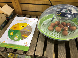 The fertilised eggs have arrived & we are hoping for some EGG-stra special visitors to hatch thi