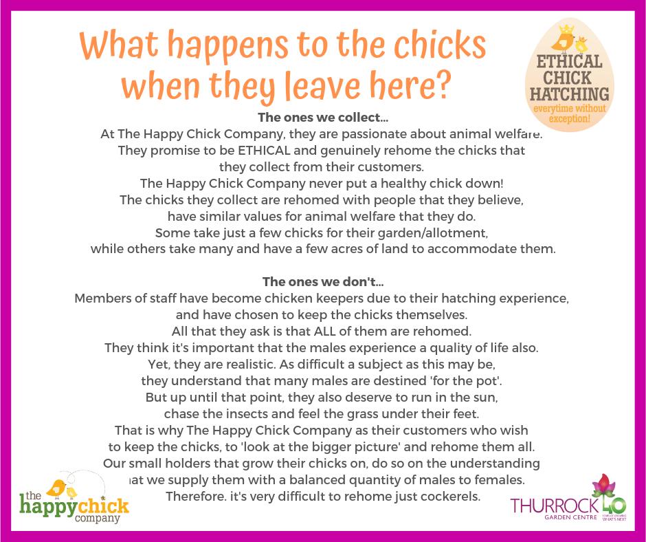 Happy Chick Company