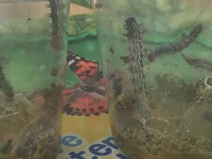 Butterfly Garden UPDATE...