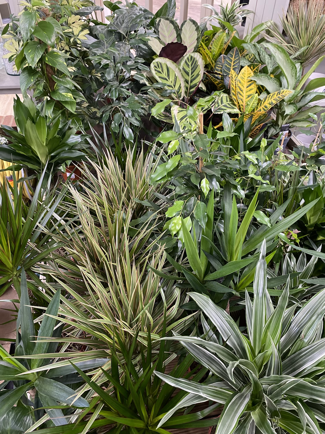 Houseplant Foliage