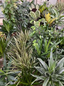 Houseplant Foliage