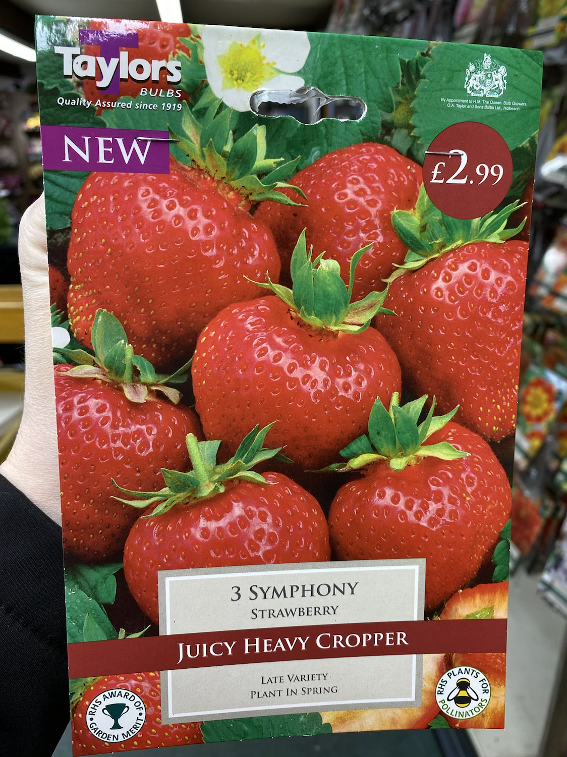 Bare Rooted Strawberries