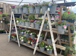 Cocktail Bedding Planters