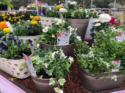 Outdoor Planted Arrangements