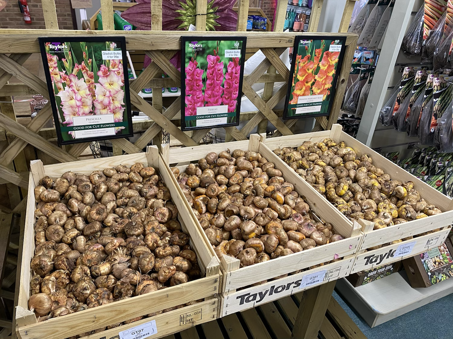 Gladioli Loose Bulbs