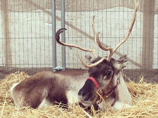 Santa's Reindeer Grotto is now OPEN!