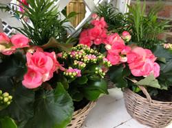 Indoor Planted Arrangements