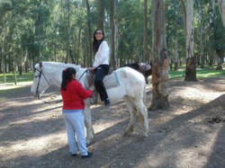 2008 argentine tour horse