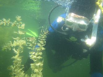 plongeurs myriophylle_12062021.jpg
