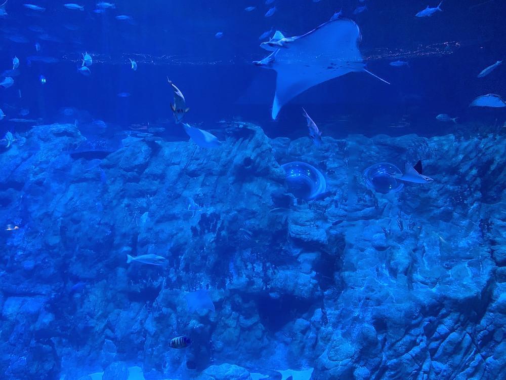 Aquarium at Ocean Park in Hong Kong