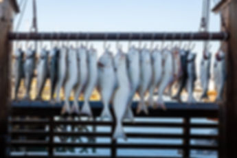 Fish on Hooks
