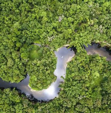 Brasil pode lucrar com venda de créditos de carbono
